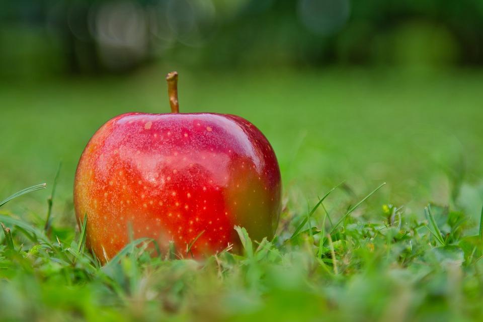 pomme gala choisir ses pommes