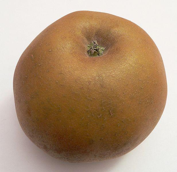 reinette grise du canada choisir ses pommes