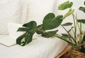 plants and sleep